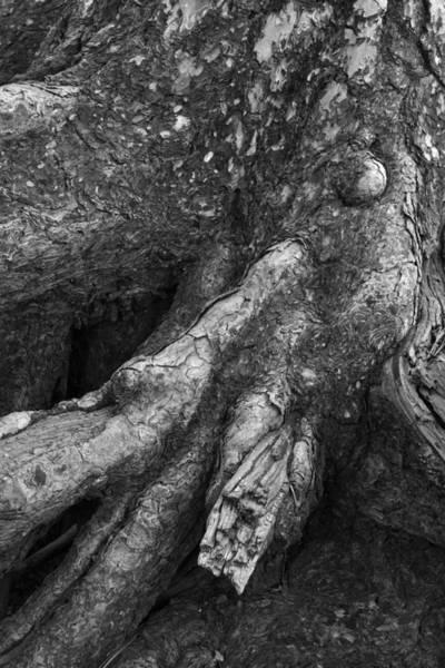 Photograph - Alien 2 by Randal Bruck