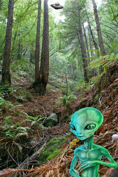 Photograph - Alien In Redwood Forest by Ben Upham III