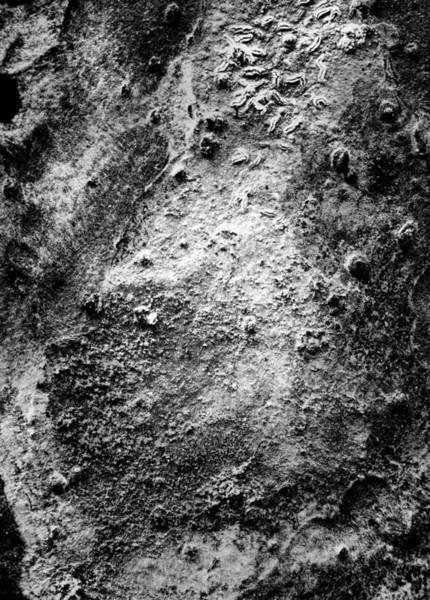 Photograph - Alien Landscape Bw by Rudy Umans