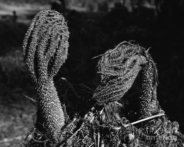 Photograph - Alien Lifeform II by Paul Cowan