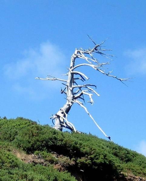Photograph - Alien Tree by AJ  Schibig