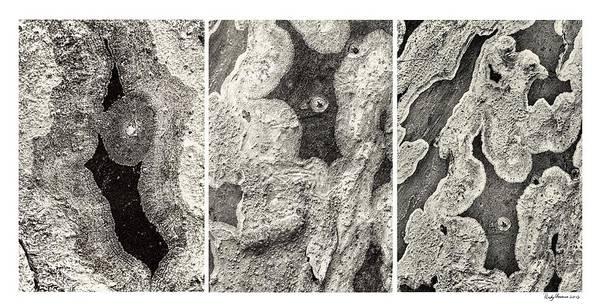 Alien Triptych Landscape Bw Art Print