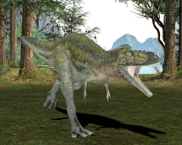 Palaeozoology Wall Art - Photograph - Alioramus Dinosaur by Friedrich Saurer