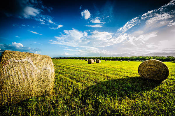 Photograph - All American Hay Bales by David Morefield