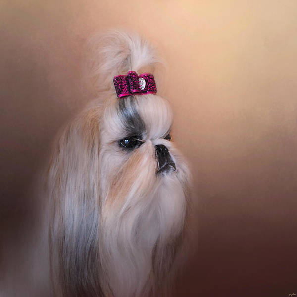 Photograph - All Dolled Up - Shih Tzu by Jai Johnson