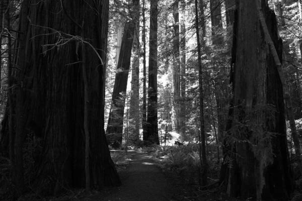 Redwoods Photograph - All Is Quiet by Laurie Search