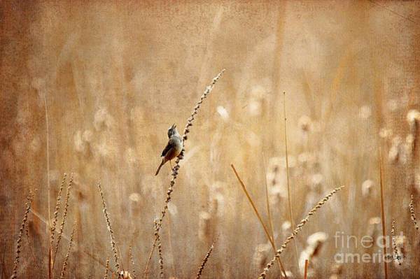 Wren Photograph - All Rejoicing by Lois Bryan