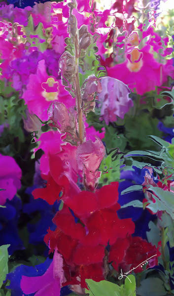 Snap Dragons Wall Art - Photograph - All The Flower Petals In This World 8 by Kume Bryant