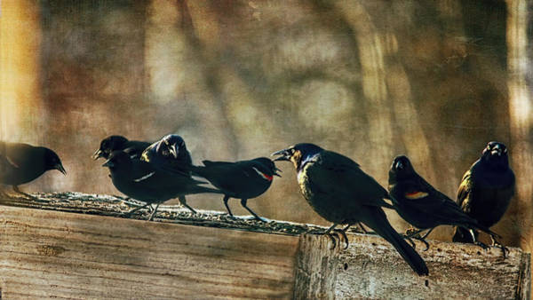 Wall Art - Photograph - All The Usual Suspects by Susan Capuano