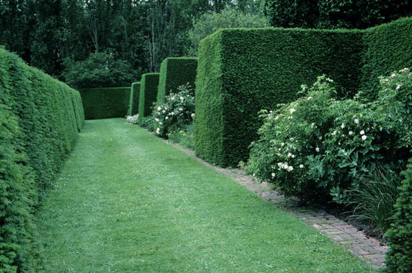 Horticulture Photograph - Allee Of Hedges by A C Seinet/science Photo Library