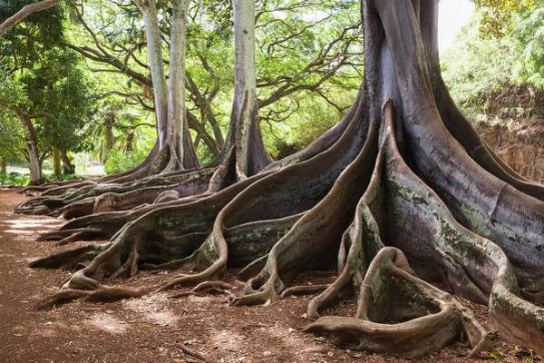 Allerton Garden Photograph - Allerton Garden, Part Of National by Alvis Upitis