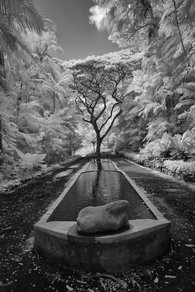 Allerton Garden Photograph - Allerton Gardens Three Pools by Michael Yeager