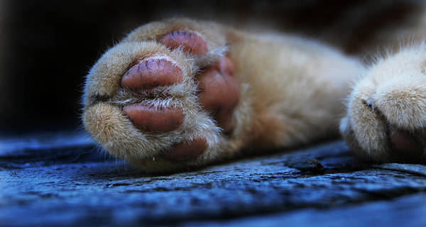 Alley Cat Snooze  Art Print