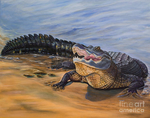 Alligator. Face To Face Art Print