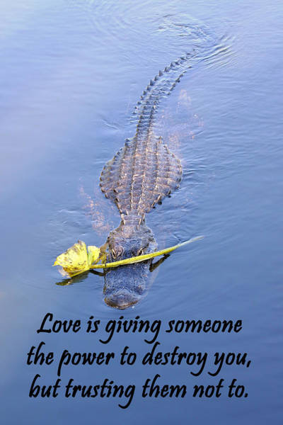 Photograph - Alligator Quote by Rudy Umans