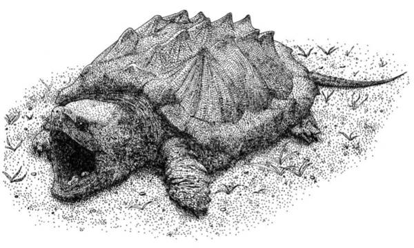 Snapping Wall Art - Photograph - Alligator Snapping Turtle by Roger Hall