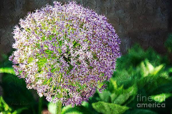 Photograph - Allium Hollandicum Purple Sensation Painterly by Andee Design