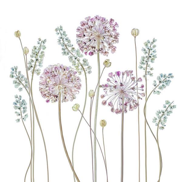 Wall Art - Photograph - Allium by Mandy Disher