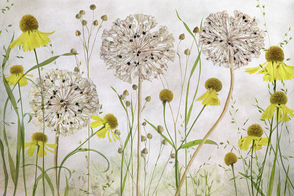 Wall Art - Photograph - Alliums And Heleniums by Mandy Disher