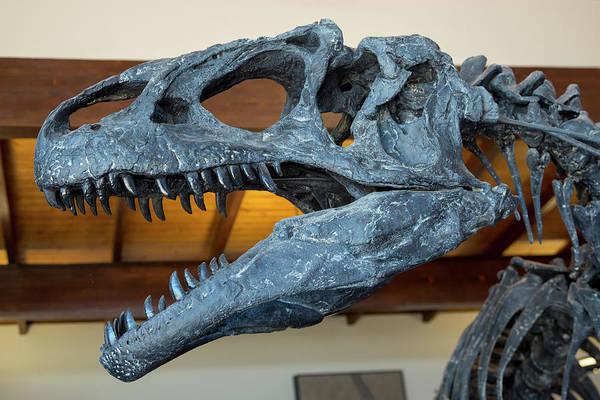 Deposit Photograph - Allosaurus Dinosaur Fossil Display by Jim West