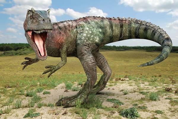 Palaeozoology Wall Art - Photograph - Allosaurus Dinosaur by Roger Harris