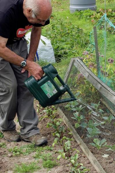 Vegetable Garden Photograph - Allotment Cultivation by David Woodfall Images/science Photo Library