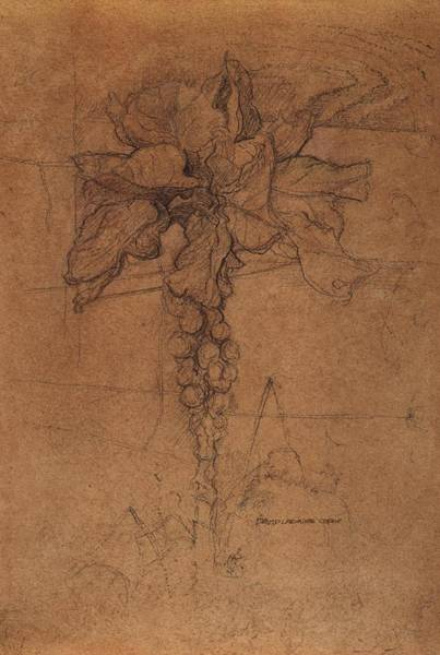 Organic Drawing - Allotment Study  by David Ladmore
