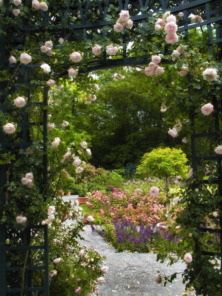 Arbor Photograph - Allure Of Roses by Jessica Jenney