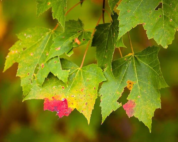 Photograph - Almost Autumn by Melinda Ledsome