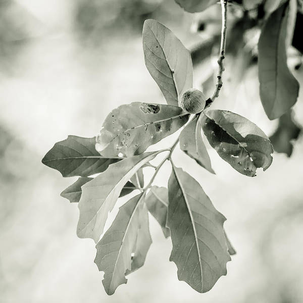 Photograph - Almost Green by Melinda Ledsome
