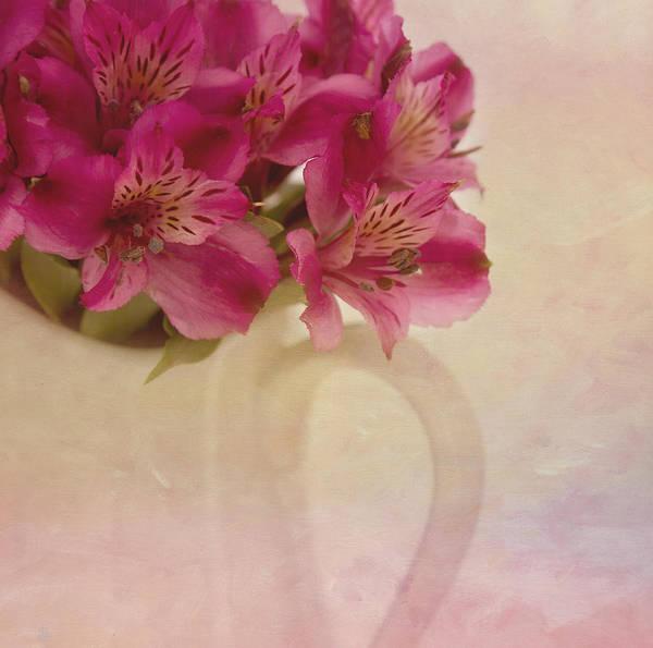 Alstroemeria Photograph - Almost by Kim Hojnacki