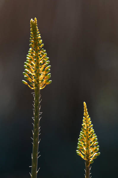 Photograph - Aloe Plant by Tam Ryan
