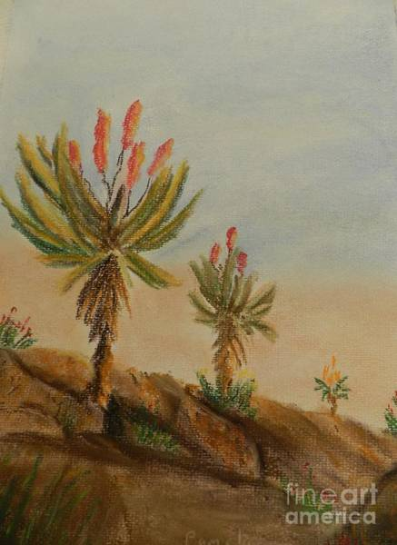 Wall Art - Painting - Aloes by Pamela  Meredith