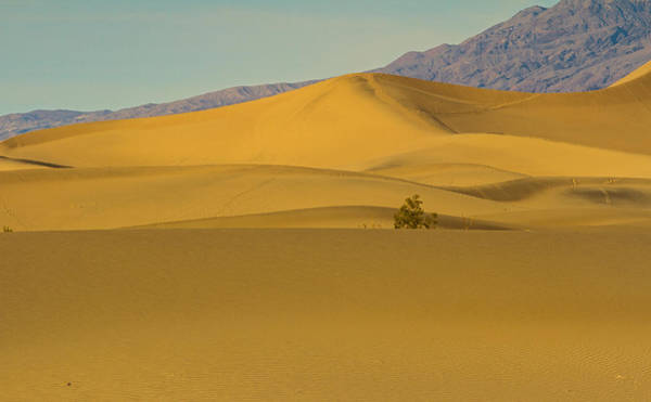 Death Valley Np Photograph - Alone Amidst The Dunes by Kunal Mehra