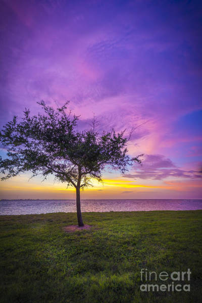Wall Art - Photograph - Alone At Sunset by Marvin Spates