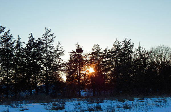 Photograph - Alone At Sunset by Wild Thing