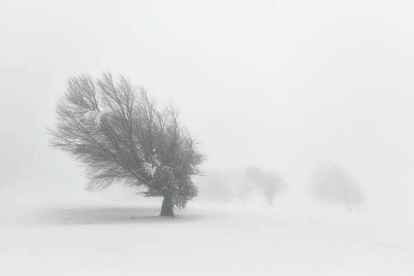 Misty Photograph - Alone by Fotoea