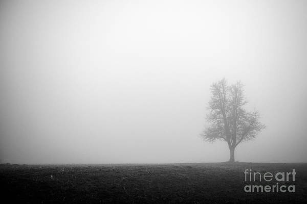 Photograph - Alone In The Fog - Bw by Hannes Cmarits