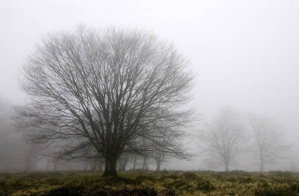 Niebla Wall Art - Photograph - Alone In The Forest by Patxi Badiola