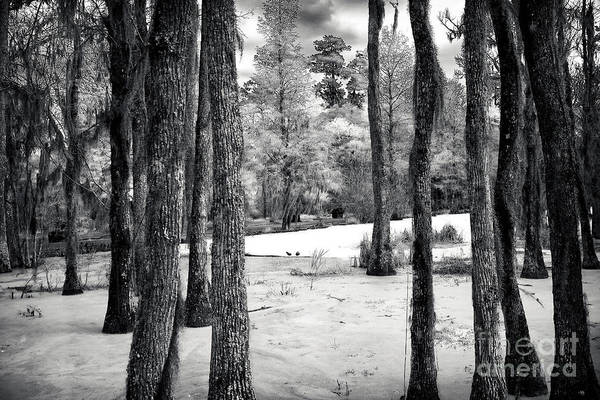 Photograph - Alone In The Swamp by John Rizzuto