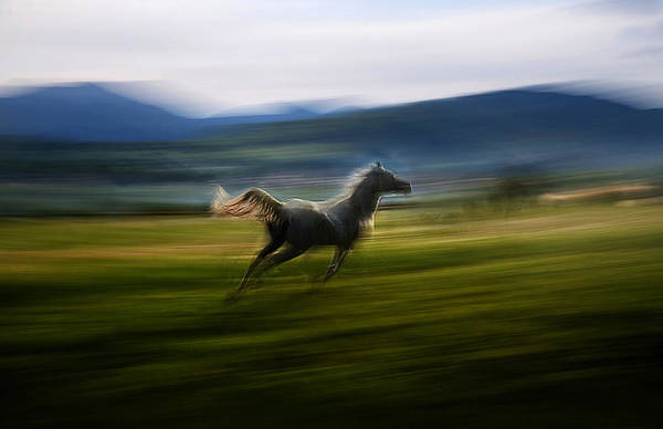 Fast Photograph - Alone by Milan Malovrh