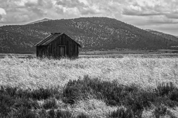 Photograph - Alone by Sherri Meyer