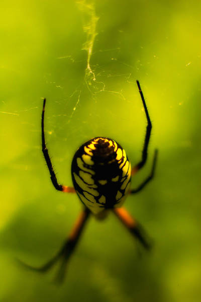 Photograph - Along Came A Spider by Jeff Sinon