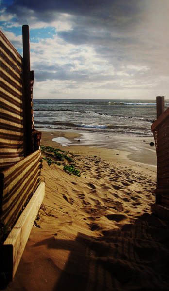 Photograph - Along The Dunes by Marilyn Wilson