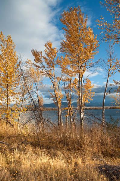 Photograph - Along The Lake by Fran Riley