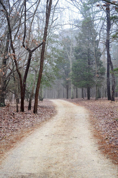 Photograph - Along The Path by Terry DeLuco