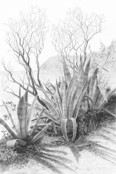 Hiking Drawing - Along The Path To Monterosso by Diane Cardaci