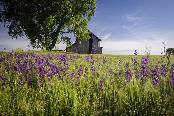 Great Plains Photograph - Along The Roadside by Scott Bean
