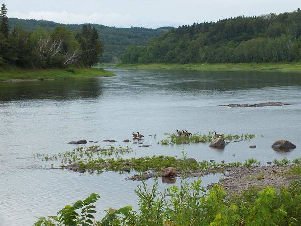 Aroostook County Photograph - Along The Saint John River by Gene Cyr
