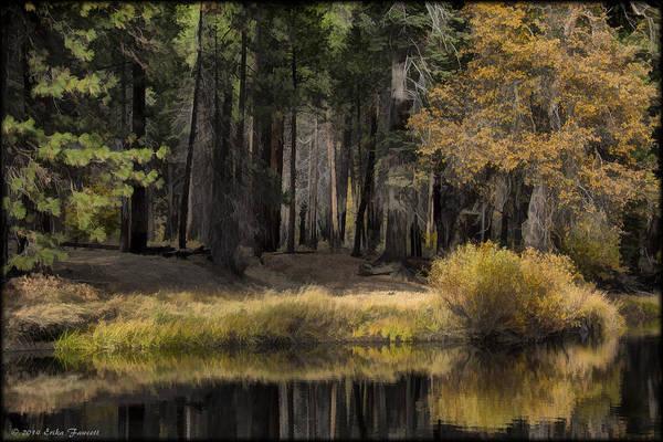 Photograph - Along The Stream by Erika Fawcett